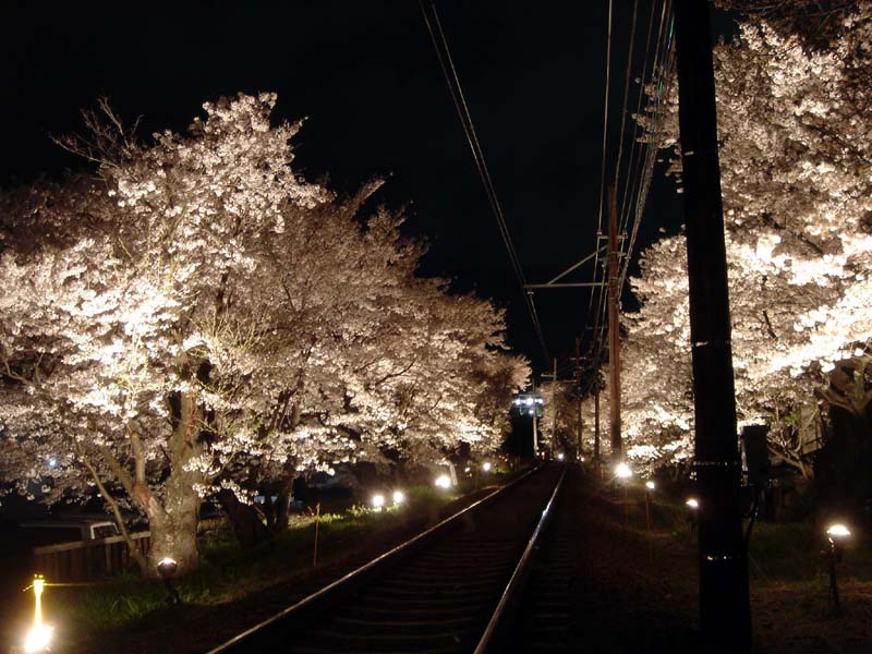 A small neighborhood light-up by the train tracks