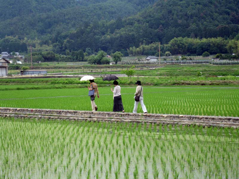 Out for a stroll in some rice paddies.  Please note the umbrellas on a neither sunny nor rainy day.  We have at last established Japan Mystery #1,000.