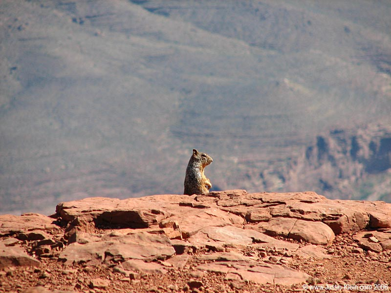 A squirrel perches atop the canyon's edge and ponders life.