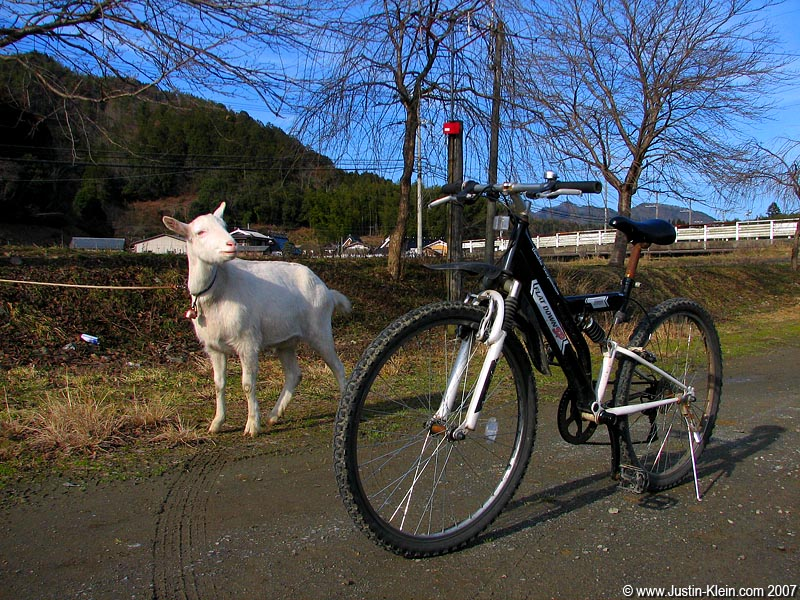 This picture is a lie!  It was actually taken on a ride from Kyoto to Miyama back in January.  As I was riding along the small mountain road, I heard what I could've sworn was a goat off in the distance…