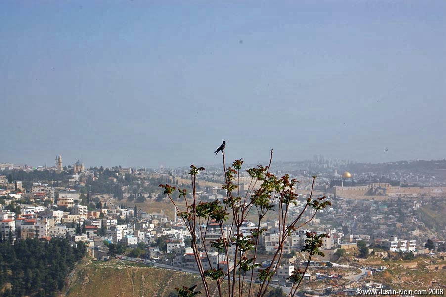 A bird perched over Jerusalem.