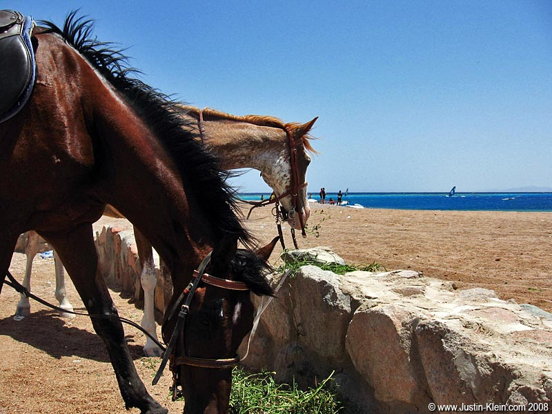 One thing we didn't get a chance to do in Dahab was horseback riding.
