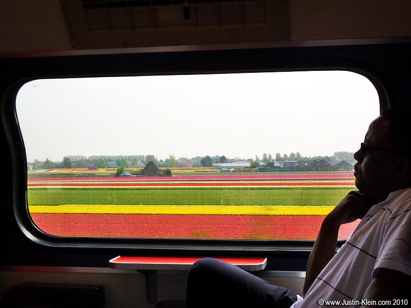 Passing the tulip fields on the way to Amsterdam.