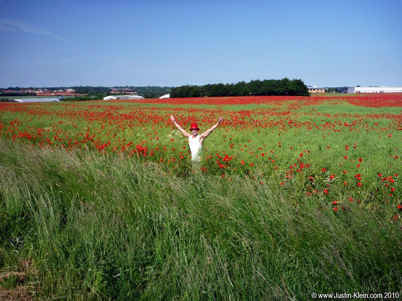 A huge field of poppies just outside Randers.