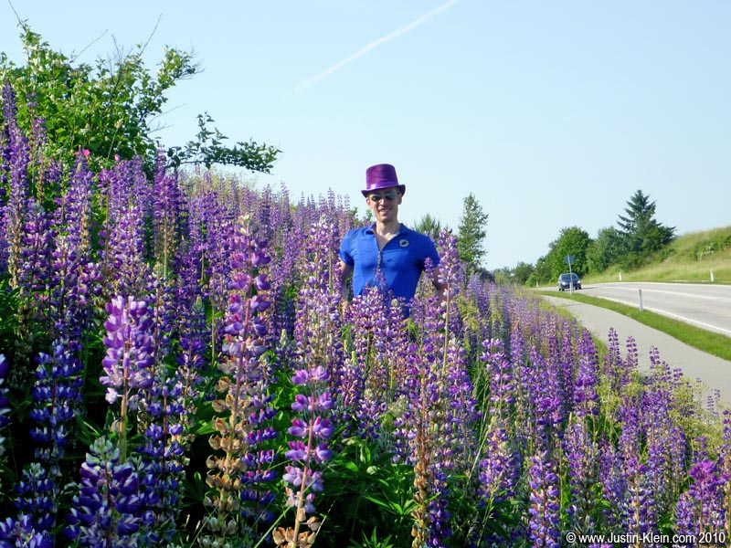…And ironically, just a few km down the road, a hill covered in purple.  One field for each of our hats : )