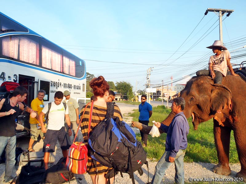 …Because in Thailand, there's nothing unusual about hopping off your bus to find a guy sitting there on his elephant.