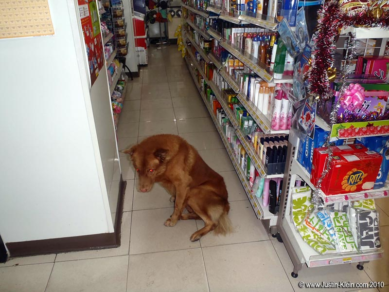 You know you're not in Kansas when you pop into a 7-11 to find a stray dog just chillin in one of the aisles : P