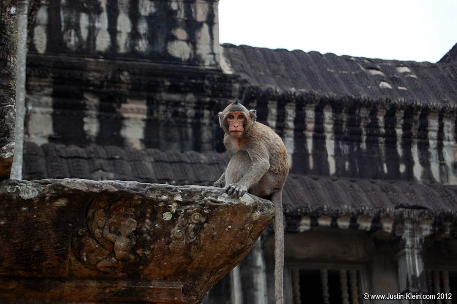A wild monkey sitting on a ledge at Angkor Wat.