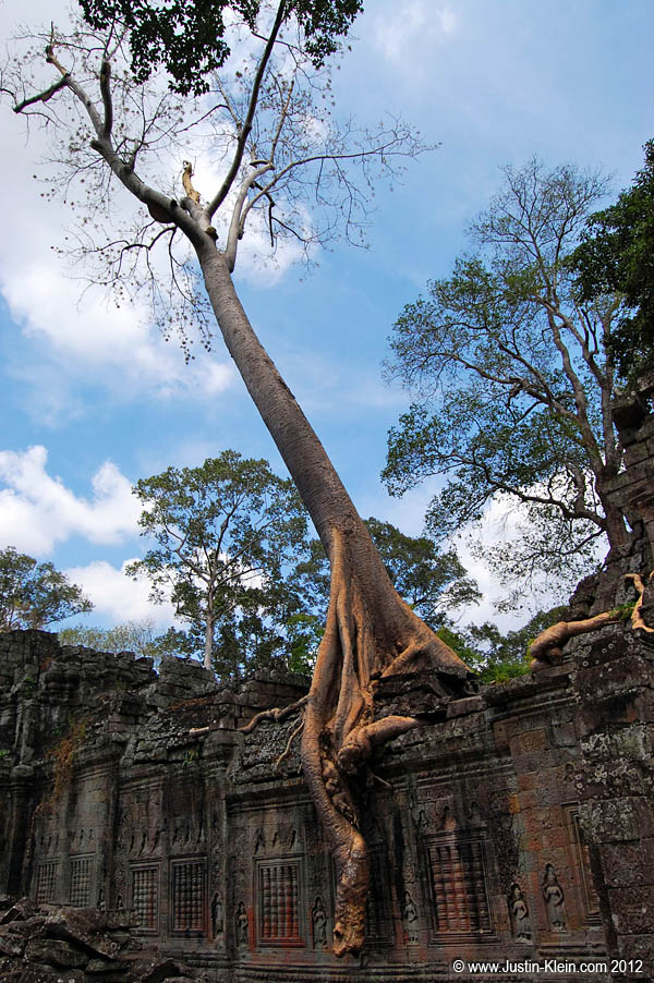 The fact that a tree that size could've overgrown Preah Khan not only since it was built, but since it was abandoned, is a true testament to how old it really is.