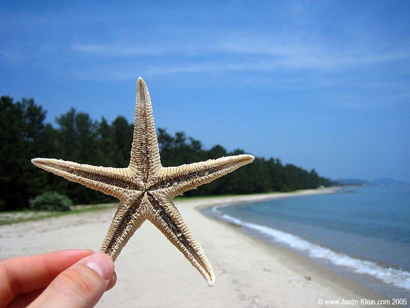 An old sea star at Amanohashidate (Post)