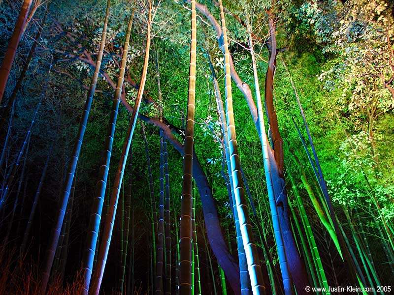 An illuminated bamboo grove in Arashiyama, Kyoto (Post)