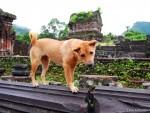 A Friendly Puppy