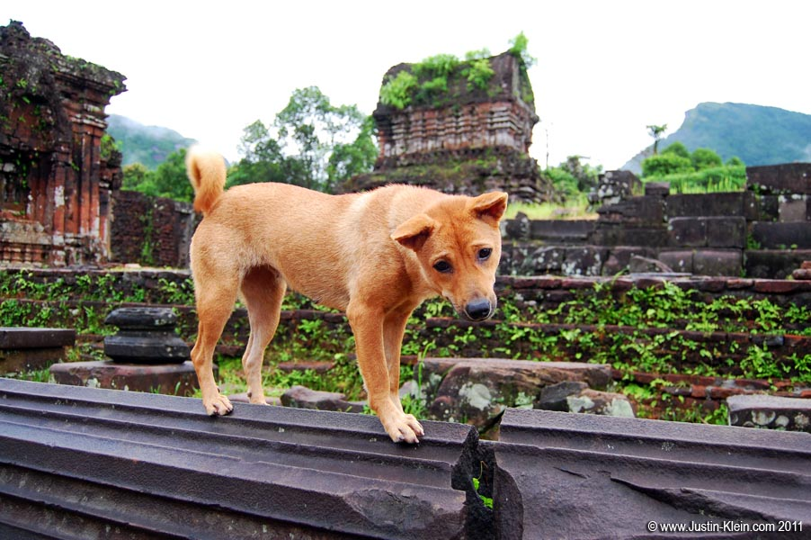 A friendly stray puppy I met wandering among the ancient ruins of My Son, Vietnam.