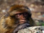 14_07_13-Annoyed-Monkey